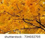 golden autumn background of... | Shutterstock . vector #734032705