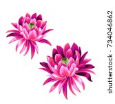 2 vector lotus flower... | Shutterstock .eps vector #734046862
