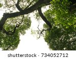 the tree on white background | Shutterstock . vector #734052712