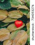 red symbol of love artificial... | Shutterstock . vector #734053276