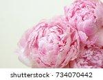 blooming flowers of pions...   Shutterstock . vector #734070442