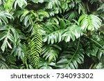 leaves in the garden  fresh... | Shutterstock . vector #734093302