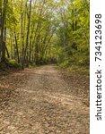 Bike & Hiking Trail In The Woods