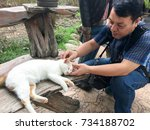 a kindly man playing with a cat ... | Shutterstock . vector #734188702