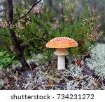 "The  Fungus ""amanita"" Or ""fly..."