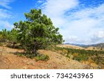 brightly green pine in the... | Shutterstock . vector #734243965