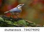 nuthatch.sitta europaea .with... | Shutterstock . vector #734279092