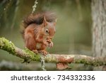 Rendangered Red Squirrel In...