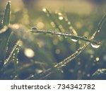 Photo Shows A Closeup Of Grass...