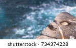 crab at the coast of plaza sur... | Shutterstock . vector #734374228