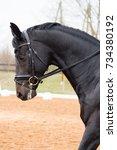 portrait of dressage horse in... | Shutterstock . vector #734380192