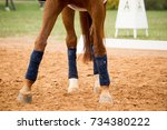 close up of horse legs in the... | Shutterstock . vector #734380222
