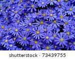 Vibrant Bright Purple Daisy...