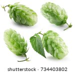 green hops isolated on a white... | Shutterstock . vector #734403802