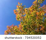 colors of autumn | Shutterstock . vector #734520352