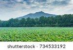 lotus | Shutterstock . vector #734533192