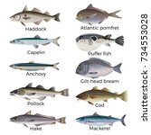 commercial fish species. vector ... | Shutterstock .eps vector #734553028