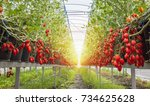 red cherry tomato  growing... | Shutterstock . vector #734625628