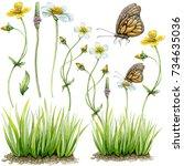 hand painted watercolor...   Shutterstock . vector #734635036