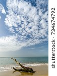 a tree branch lost at sand in... | Shutterstock . vector #734674792