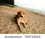 dog on the sand near the lake... | Shutterstock . vector #734714032