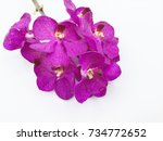purple orchid on white... | Shutterstock . vector #734772652