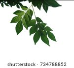 tree branch isolated | Shutterstock . vector #734788852
