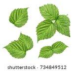 Raspberry Leaves Isolated On...