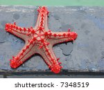 Red Knobbed Starfish ...