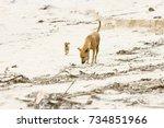 dog mummy training the... | Shutterstock . vector #734851966
