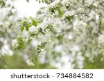 spring background  flowering... | Shutterstock . vector #734884582