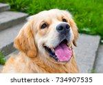 golden retriever  portrait of a ... | Shutterstock . vector #734907535
