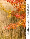 beautiful autumn background... | Shutterstock . vector #734941666