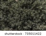 lavender cotton bush dense... | Shutterstock . vector #735011422