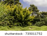 blurred green and yellow bushes ... | Shutterstock . vector #735011752