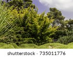 green and yellow bushes with... | Shutterstock . vector #735011776