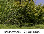 green and yellow bushes with... | Shutterstock . vector #735011806