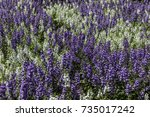 purple and white flowers mixed... | Shutterstock . vector #735017242