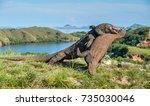 the fighting komodo dragons ... | Shutterstock . vector #735030046