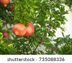 pomegranate fruit has become in ... | Shutterstock . vector #735088336