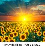 Sunflower Fields During Sunset...