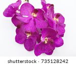 purple orchid on white... | Shutterstock . vector #735128242