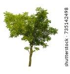 neem tree isolated on white... | Shutterstock . vector #735142498