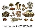mushroom hand drawn set.... | Shutterstock .eps vector #735172492