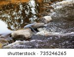 autumn by the river  | Shutterstock . vector #735246265