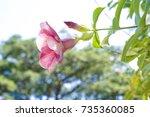 Purple Flowers Bloom In The...