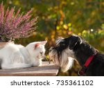 cat and dog love. little white... | Shutterstock . vector #735361102