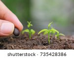 Small photo of Seedlings are grown from the ground and Hand planting a seed in soil agriculture on natural green background, Growing plants concept
