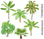 tropical plant set. palm trees  ... | Shutterstock .eps vector #735483562