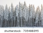 Winter forest with frost and cold weather
